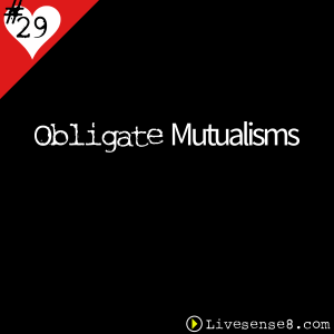 LS8 29 Obligate Mutualisms - Livesense8.com - The Live sense8 Podcast Cover Art